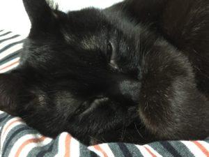 黒猫の写真