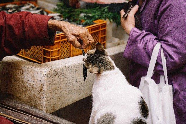 猫に生魚は与えないほうがよい?