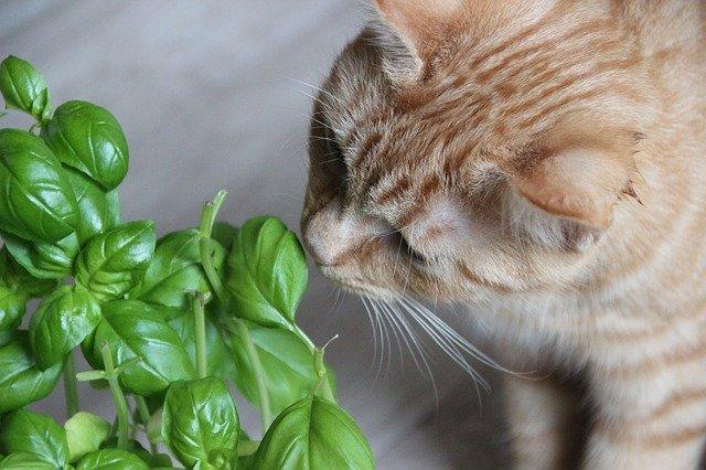 猫が野菜を食べちゃったけど大丈夫!?
