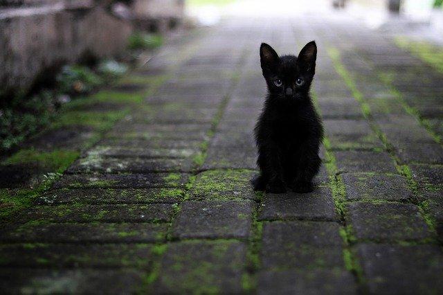 猫がネギを食べてしまったら【対処方法・症状・予防策】