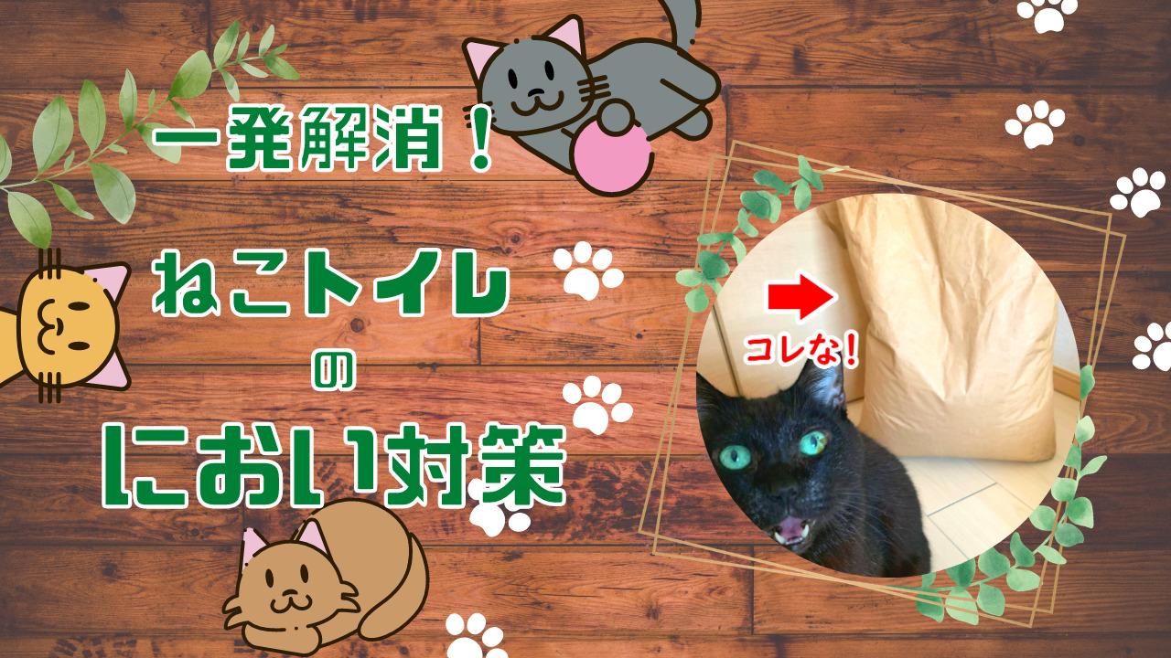 猫トイレのにおい対策に効果的!おすすめの猫砂